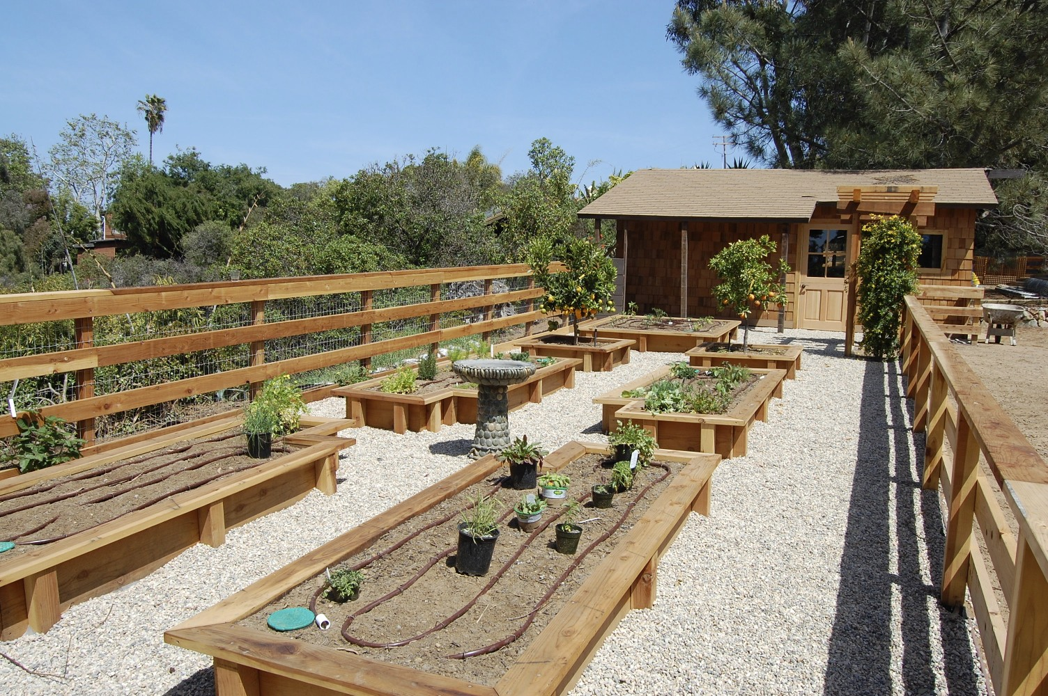 Encinitas Backyard Garden Remodel